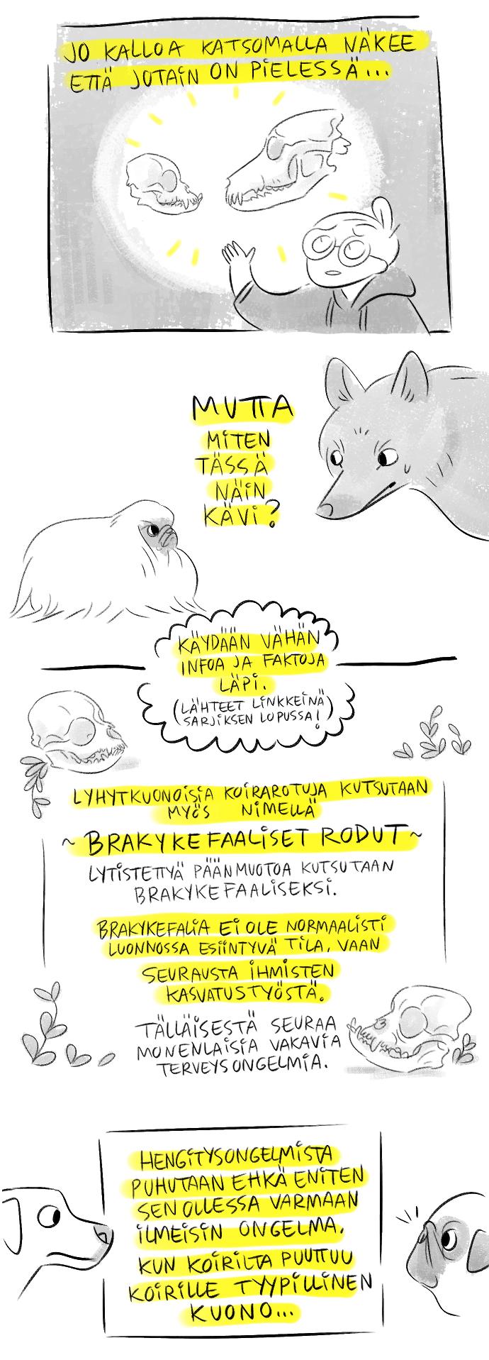 Nikkilän Eläinlääkäri